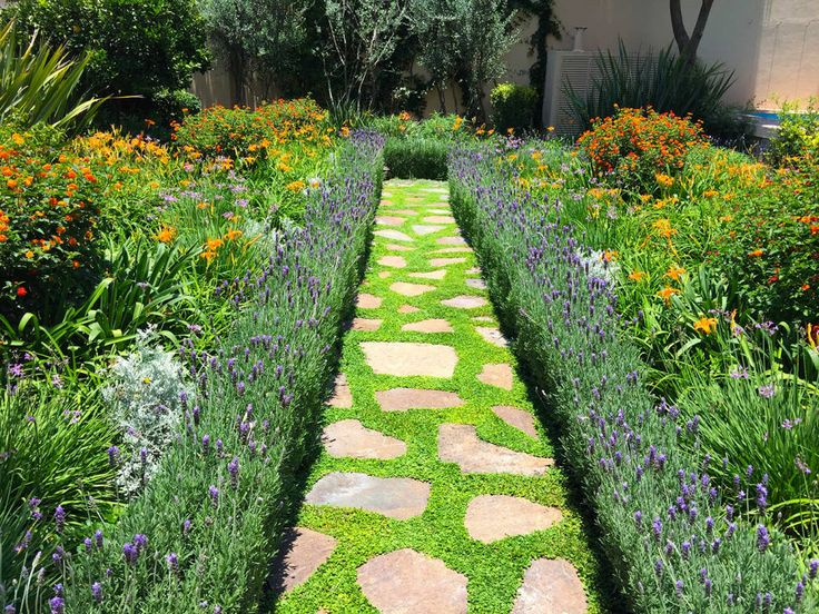 17 best images about huerto y plantas ornamentales on for Azucena plantas jardin