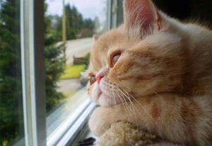 Galería: 20 Gatos melancólicos esperando a sus dueños frente a la ventana