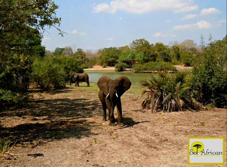 A green oasis! #elephant #lake #oasis #exotic #Africa #SouthAfrica #adventure #explore #discover #holiday #travel #holidaydestination #idealholiday #fun #wild #wilderness #safari #tour #tourism #tourist #tourismagency #exotic