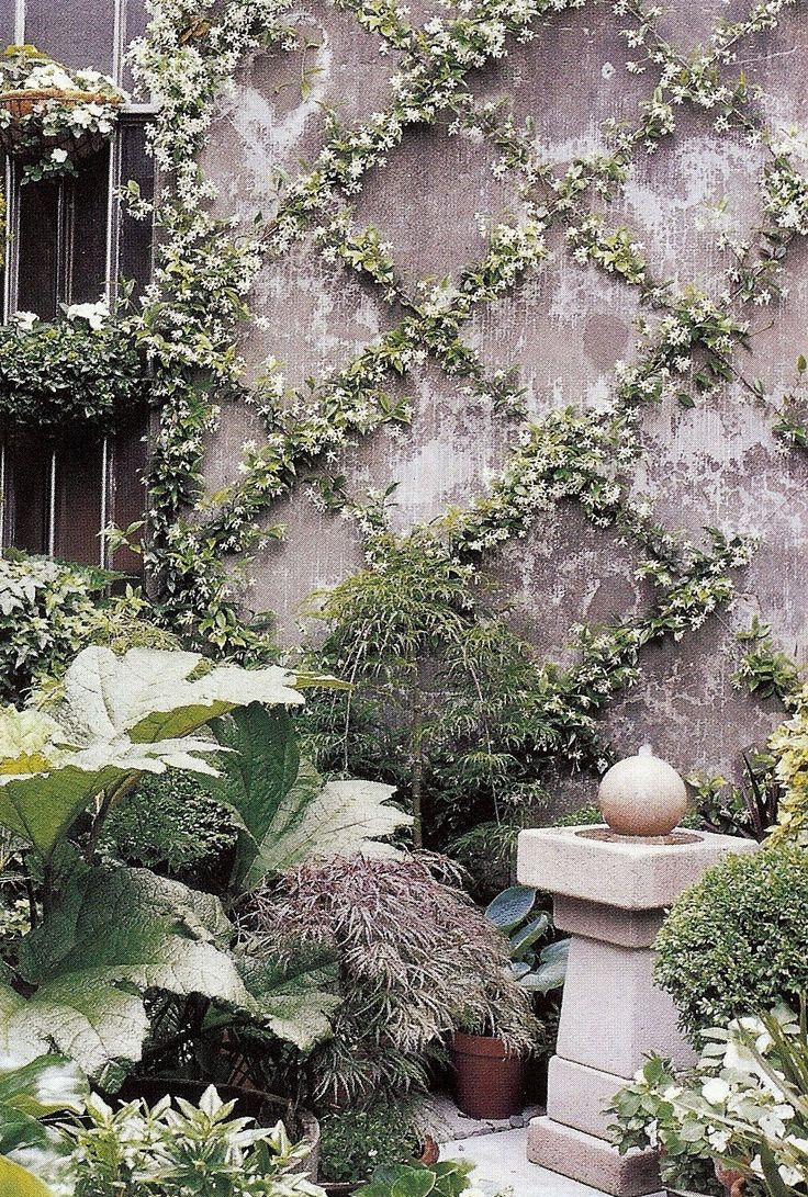 Star Jasmine trained over a wire lattice grid in an espalier form transforms a bare wall