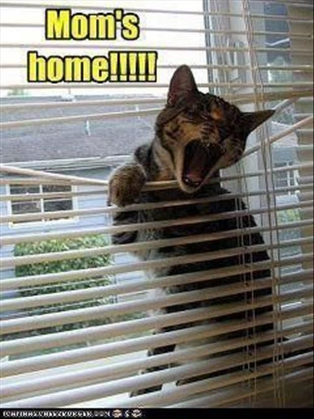 Attack Of The Funny Animals - 32 Pics: Cats, Houses, Dogs, Funny Cat, Funny Pictures, Funny Stuff, Humor, Funny Animal, Funnie