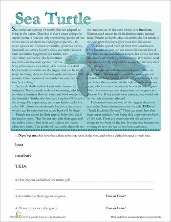 (Have FREE membership) Cold Read: Worksheets: Sea Turtle Facts