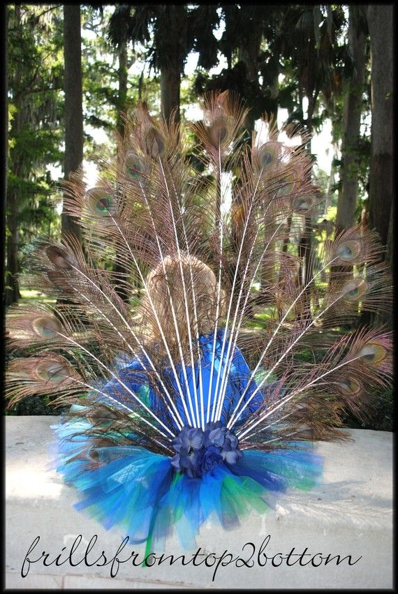 Attachable peacock plume