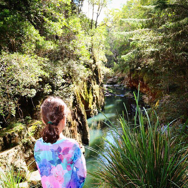 Killarney Glen, Beechmont  #VisitGoldCoast #ThisIsQueensland #SeeAustralia