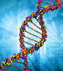 Seven new genetic regions linked to type 2 diabetes-Seven new genetic regions associated with type 2 diabetes have been identified in the largest study to date of the genetic basis of the disease.  -News Release February 10, 2014 University of Oxford