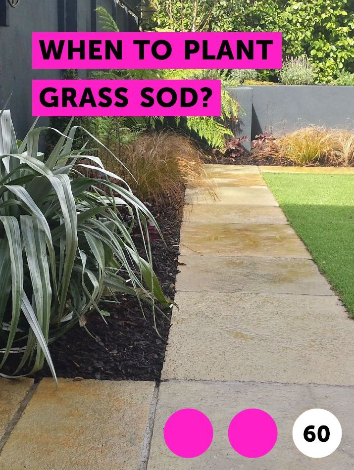 When To Plant Grass Sod Plants Weeping Mulberry Tree Tree Identification