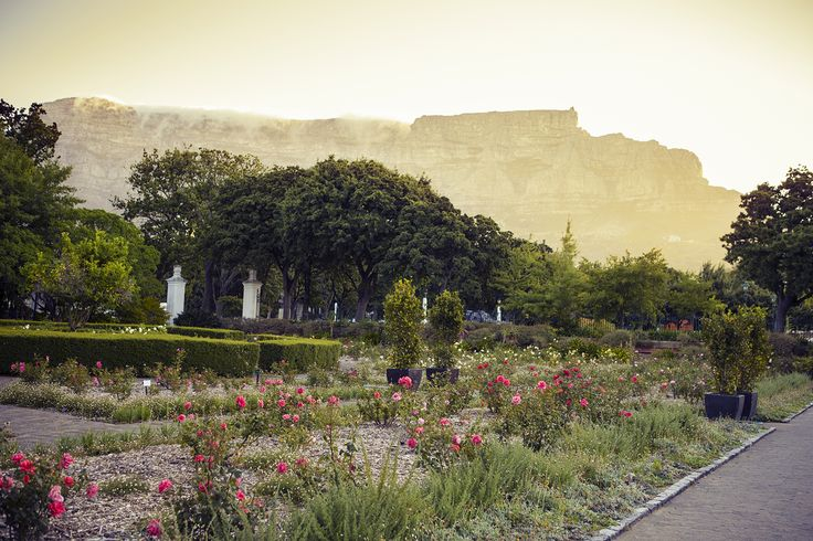Company Gardens, Cape Town, South Africa.