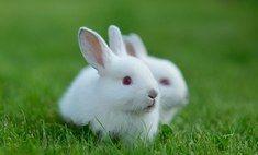 Домашние любимцы - декоративные кролики. Уход, питание, воспитание