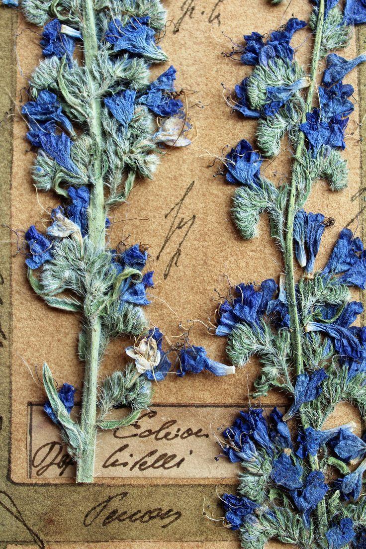 Prensado flores herbario presionado flor arte 30 x 22