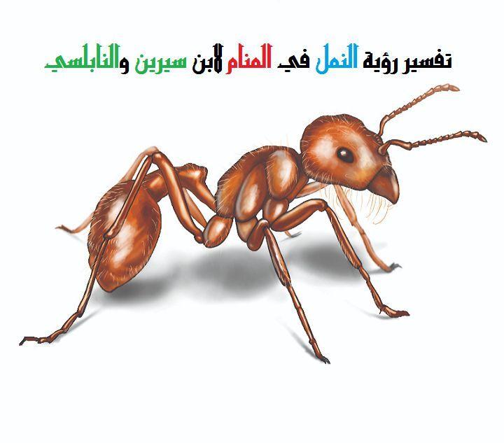 تفسير رؤية النمل في المنام لابن سيرين والنابلسي موقع مصري Bee Insects