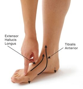 9 Poses to Prevent Bunions & Relieve Bunion Pain | Yoga International