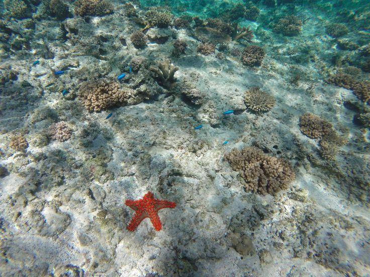 Snorkeling in Western Australia