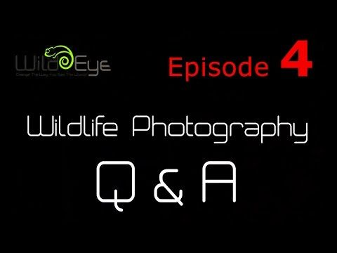 Wildlife Photography Q&A: Episode 4
