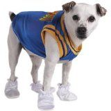 Sports Dog Costume for Halloween, Choose a Cheerleader costume for dogs, a Sports jersey, or a basketball costume.