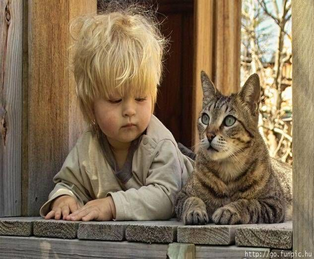 50 Best Babies And Kitten Images On Pinterest Kitty Cats