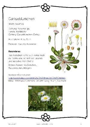 Herbarium: Anleitung, Vorlage, Informationsblätter zu 20 einheimischen Blumen.