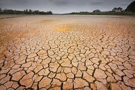 Water loss and drought can damage the environment. Explain some of the implications drought.