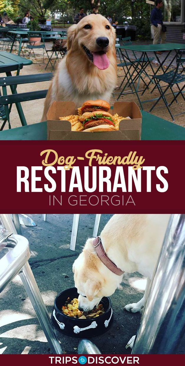 9 Dog Friendly Spots In Georgia To Enjoy A Meal With Your Best Bud Dog Friends Dog Friendly Atlanta Dogs