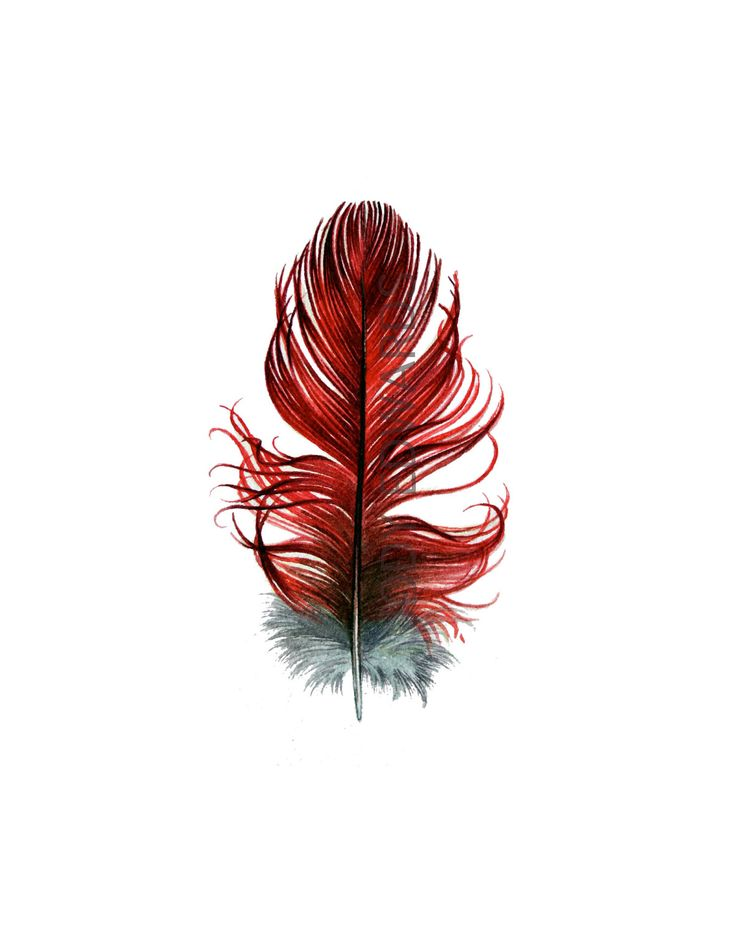 watercolor tattoo | ... Amazon Parrot / Macaw feather - Nightly Study 375- Original watercolor