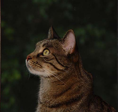 Feeding Your Cat: Know the Basics of Feline Nutrition :: healthy cat diet, making cat food, litter box, cat food, cat nutrition, cat urinary tract health
