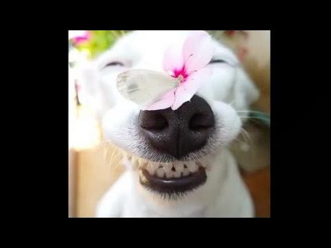 Best Funny Dogs Videos Compilation 2017 (Part 1)