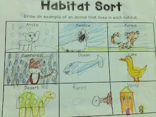 The Adventures of a First Grade Teacher: Habitats & Food Chains