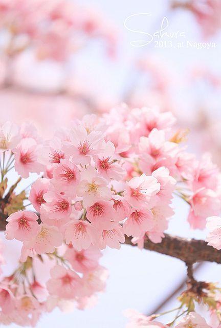 Alle rosa Blüten sind wunderschön und haben ihre eigene Bedeutung. Also, was m…