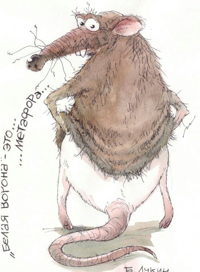 смешные картинки с крысами для новогодней образ
