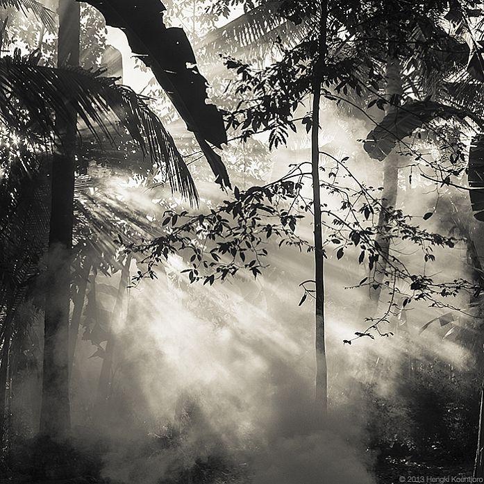 Sepia Garden, photography by Hengki Koentjoro