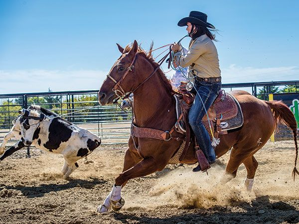 Learn about how maggots saved the day for two amazing rope horses with this article from Spin To Win Rodeo Magazine: http://spintowinrodeo.com/article/maggot-therapy-saves-careers-superb-rope-horses-53667
