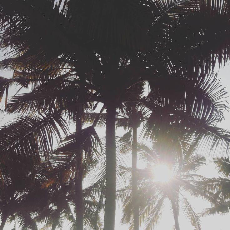 Palm trees and Sun. What else you need?! 🌞🌴🌴 #sunshine #palmtrees #Palm #vacation #aurovilledotcom #aurovillelife #welove #happiness #beautifullife #beautiful #bliss
