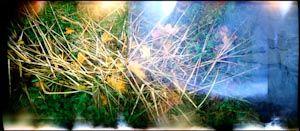 Brindilles sur fond d'automne
