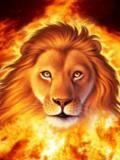burning lion