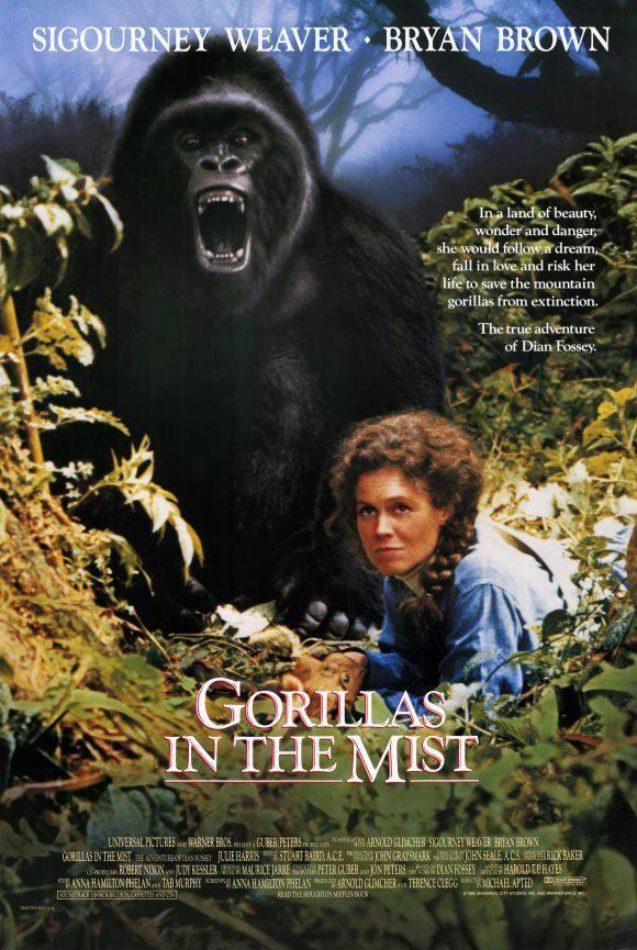 Dian Fossey llega a África para confeccionar un censo sobre una especie en peligro de extinción: el gorila de montaña. Acompañada por un rastreador nativo comienza su trabajo y queda fascinada por la vida de esos animales, a los que no teme acercarse para estudiar su comportamiento.