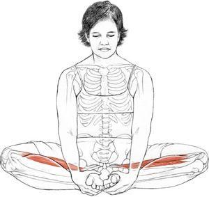 "Baddha Konasana (bound angle pose) from Leslei Kaminoff's ""Yoga Anatomy,"" Illustration by Sharon Ellis"