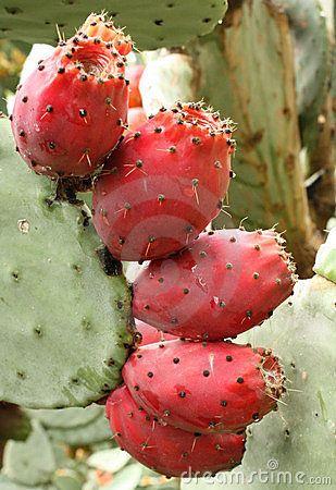 Edible fruit of fico d'India cactus in Sicily  #lipari #sicilia #sicily