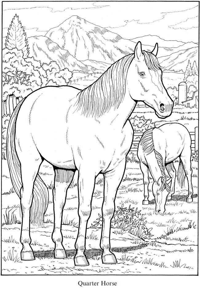 Quarter Horse Coloring Page Youngandtae Com Horse Coloring Pages Horse Coloring Coloring Pages