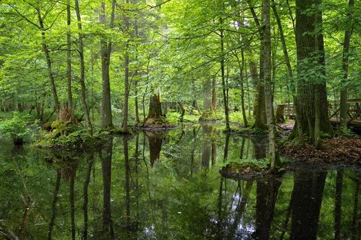 Białowieża National Park, Poland. A primeval forest that only began to be seen in 1400s, but immediately protected and unmanaged.