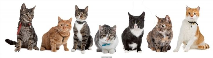 Poster of Group of cats, Cats Posters, #poster, #printmeposter, #mousepad, #tshirt