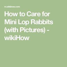 How to Care for Mini Lop Rabbits (with Pictures) - wikiHow