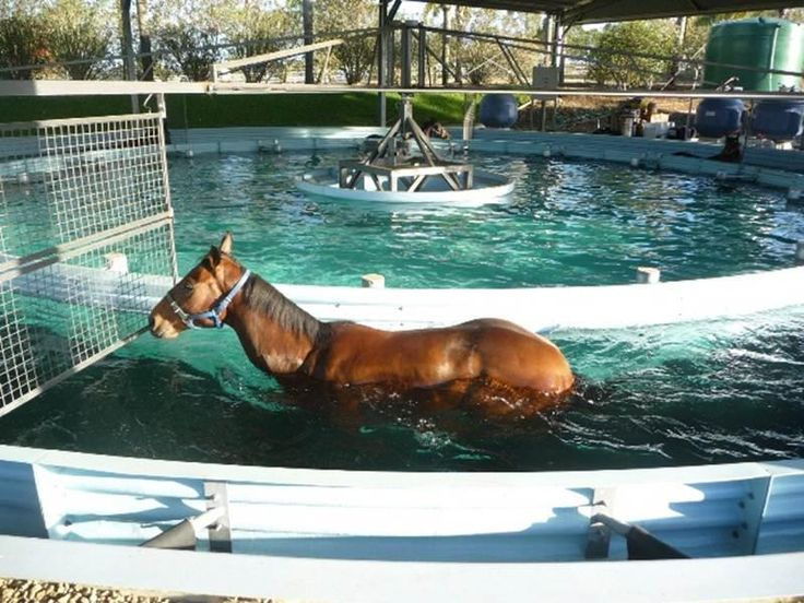clear water aqua trainer with race horse