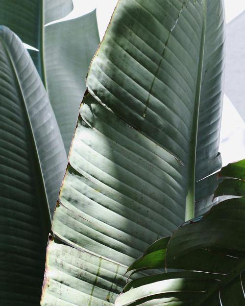 needsandwantsstudios: Turnt, that new leaf. Photo c/o @byseanbrown. #botanical #cameraroll #needsandwantspaper
