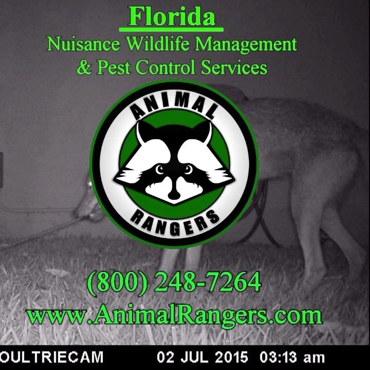 Pin By Noel Hanson On Animal Rangers Florida Nuisance Wildlife Management Pest Control Services Pest Control Services Pest Control Getting Rid Of Rats