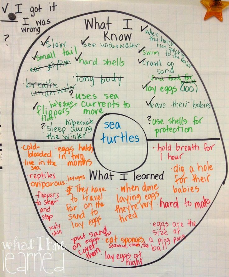 expository essay on turtles Turtles are reptiles of the order chelonii or testudines and are characterised by a  special bony shell which is developed from their ribs and acts as a shield.