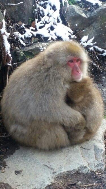 Getting a hug off mum