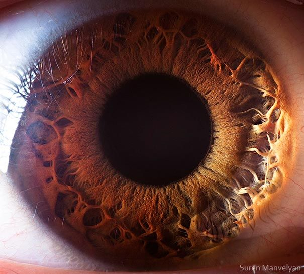 Extreme Close-Ups of the Human Eye | Bored Panda