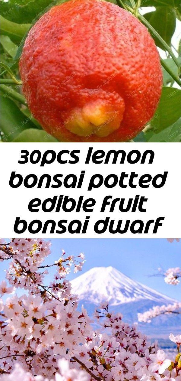 30pcs Lemon Bonsai Potted Edible Fruit Bonsai Dwarf Lemon Tree Indoor Plant For Home Garden Plants 3 Bonsai Pots Home Garden Plants House Plants Indoor