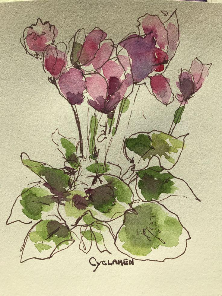 Cyclamen in ink and watercolor Linda Perlin