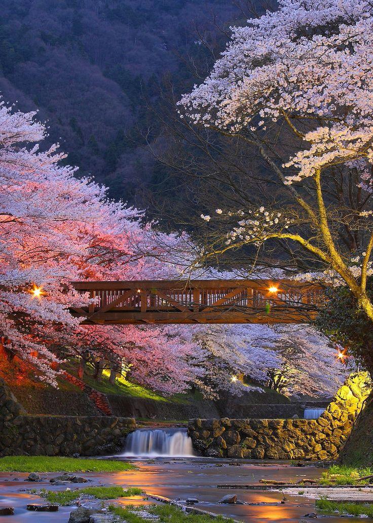 京都市 Kyoto