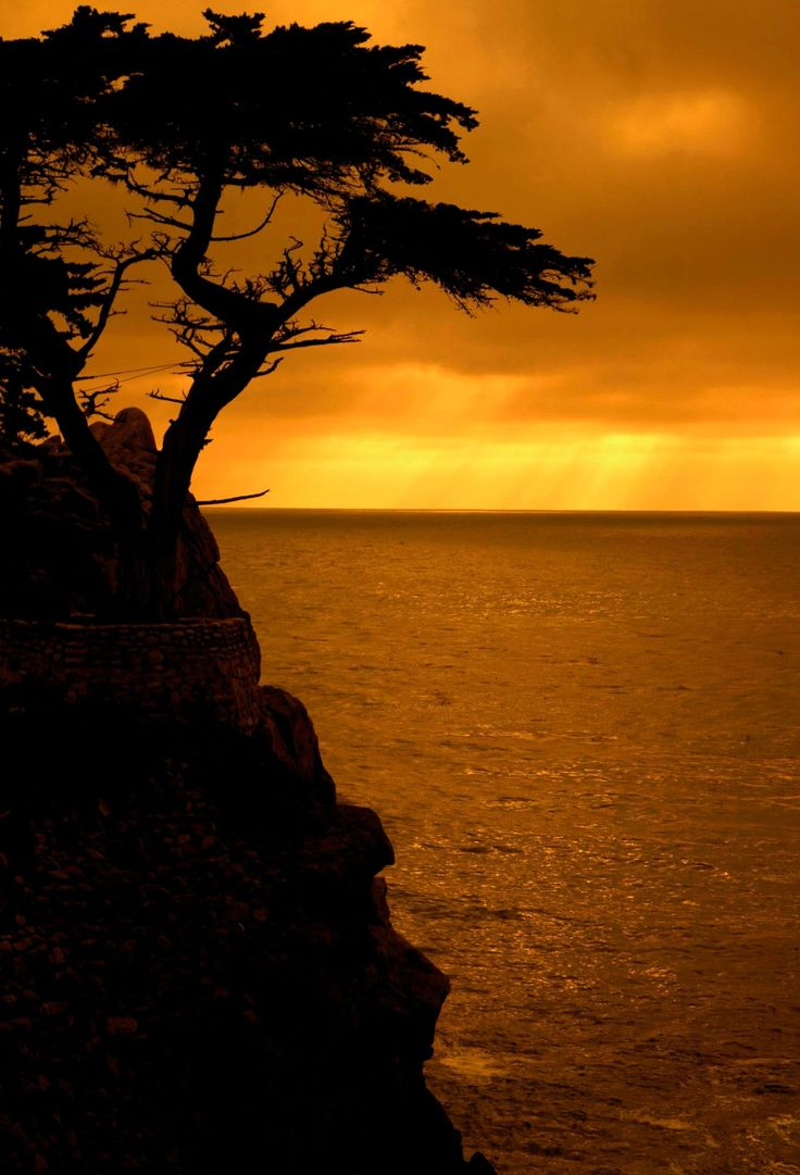 Magical sunset at 17 mile drive in Monterey, California